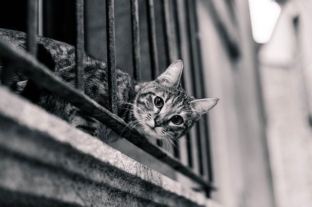 Mačka s prestrčenou hlavou cez balkónové zábradlie.jpg