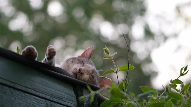 Mačka leží v kvetináči na balkóne.jpg