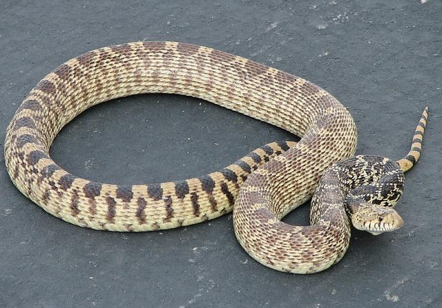 Jeden druh hada.jpg